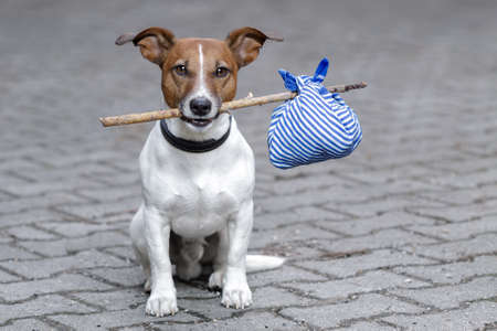 sad dog: dog with a bag on a stick Stock Photo