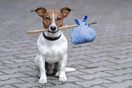 hond met een tas op een stokje Stockfoto