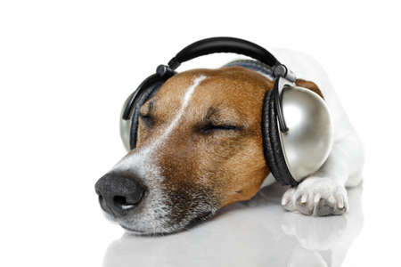 dog with headphones listening to music Stock Photo - 12810298