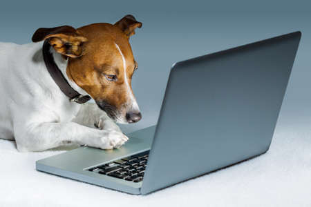 dog  with computer  and browsing the internet photo