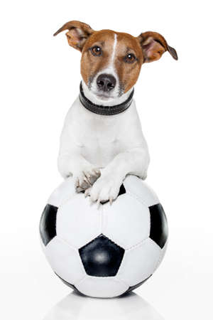 funny dog: dog with a soccer ball Stock Photo