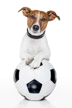 grappige honden: hond met een voetbal Stockfoto