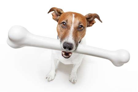 perro comiendo: perro con un hueso grande de color blanco Foto de archivo