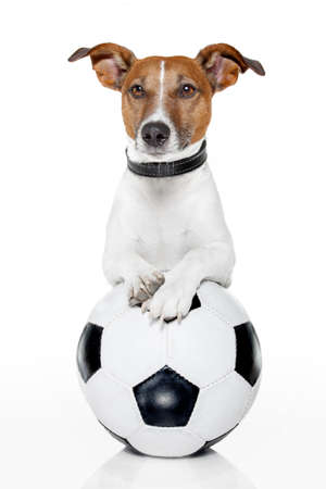 to obey: dog with a soccer ball Stock Photo