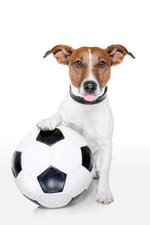 dog portrait: dog with a  soccer ball