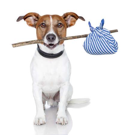 viajero: perro con un palo y una bolsa de color azul