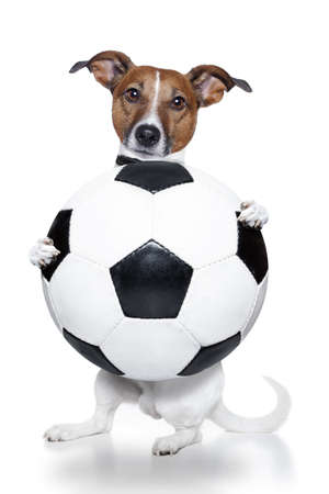 to obey: dog with soccer ball