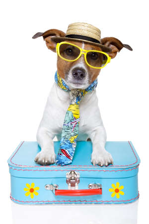 obedient: dog dressed up as a tourist