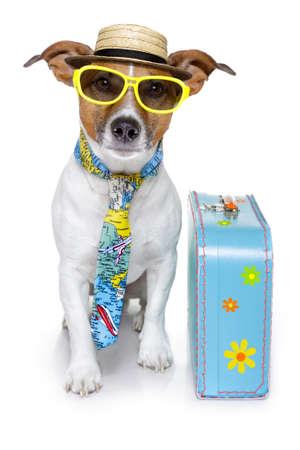 bagage: chien habill� comme un touriste Banque d'images