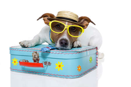 packing suitcase: dog dressed up as a tourist