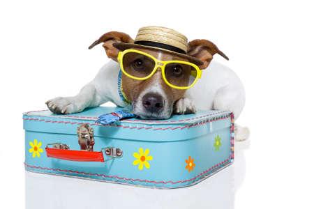 maletas de viaje: perro vestido como un turista