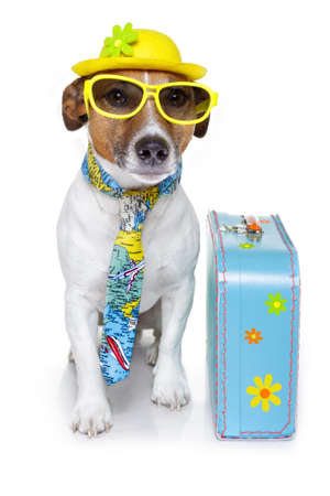 holiday pets: dog dressed up as a tourist