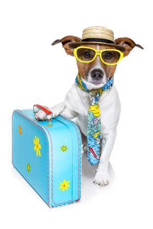 maleta: perro vestido como un turista