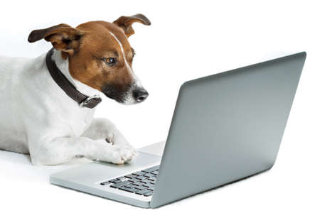 dog with computer browsing the internet photo