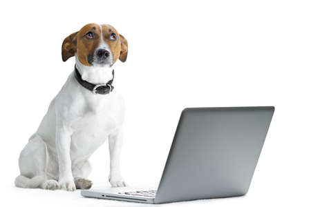 dog with computer and thinking photo