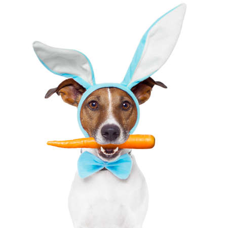 dog with bunny ears photo