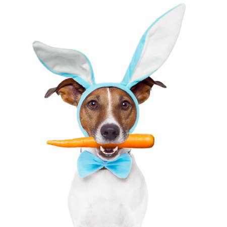 zanahorias: perro con orejas de conejo