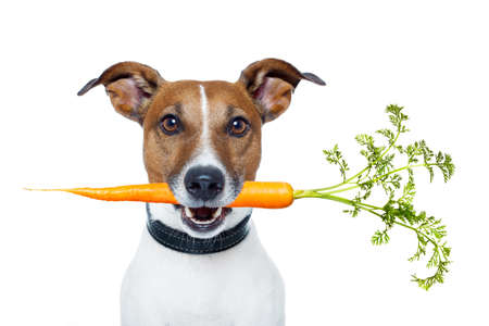 carrots isolated: healthy dog