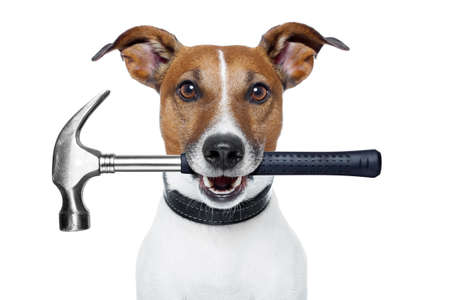 handyman dog with hammer Stock Photo
