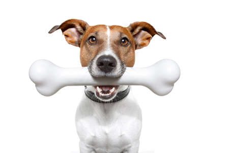 treat: dog with a bone in mouth Stock Photo