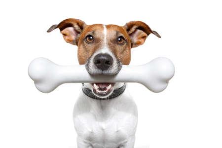 obedecer: perro con un hueso en la boca