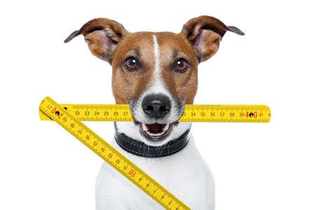 personal de mantenimiento del perro con una regla plegable de color amarillo