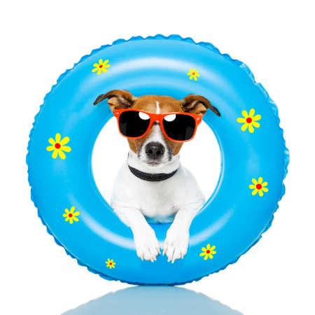 Собака с аксессуарами пляже Фото со стока