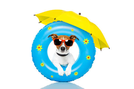 summer holiday: Dog with beach accessories