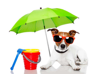 parasols: Dog with beach accessories