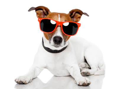 russell: dog with red shades Stock Photo