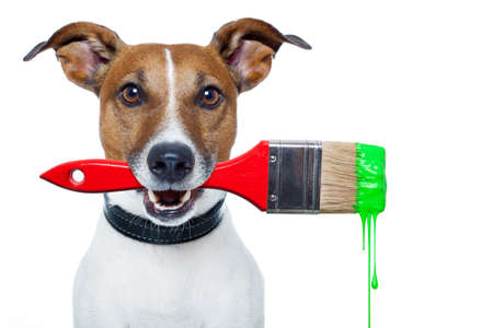 craftsman: perro con un pincel y el color verde Foto de archivo