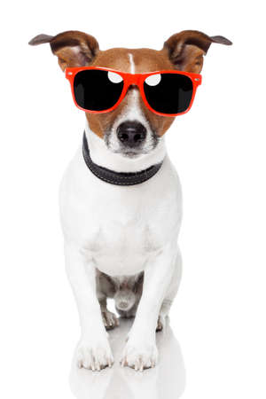 dog with red shades photo