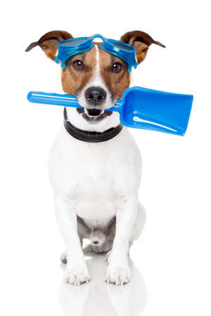dog with blue shovel and goggles