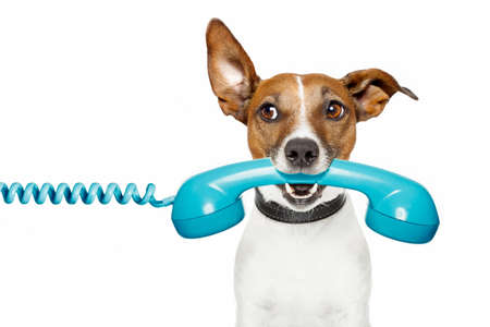 gossip: hond op de telefoon en het luisteren Stockfoto