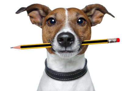 writers: dog with pencil  Stock Photo