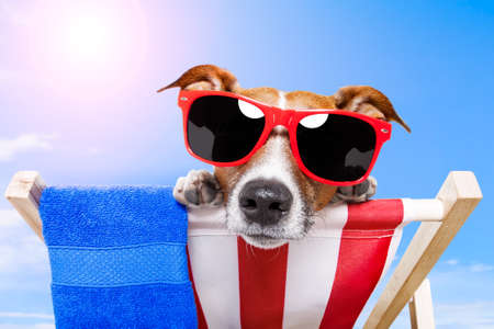 dog sunbathing on a deck chair  Stock Photo - 13092239