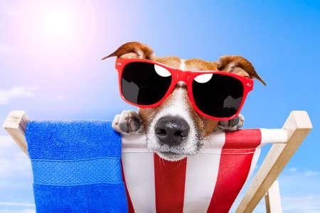 strandstoel: hond zonnen op een ligstoel