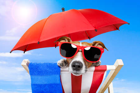 dog sunbathing on a deck chair Stock Photo - 13092229