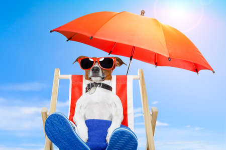 deckchair: dog sunbathing on a deck chair