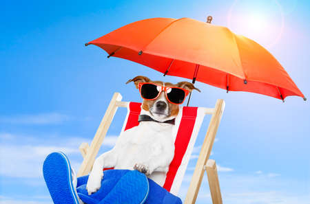 dog sunbathing on a deck chair photo