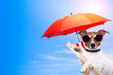 holiday: Dog sunbathing on a deck chair with empty space beside