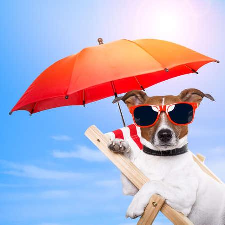 gafas de sol: Perro tomando el sol en una tumbona