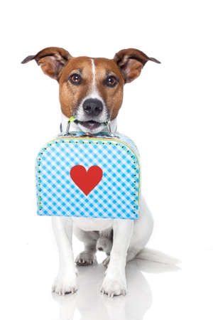 jack russell terrier puppy: dog with luggage