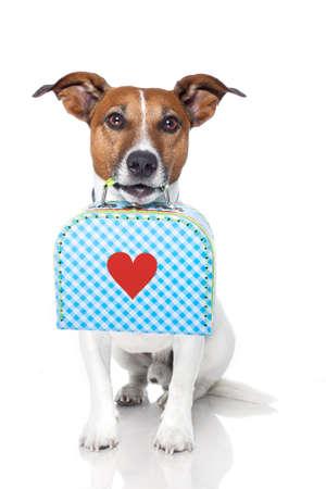 Hund mit Gepäck Standard-Bild