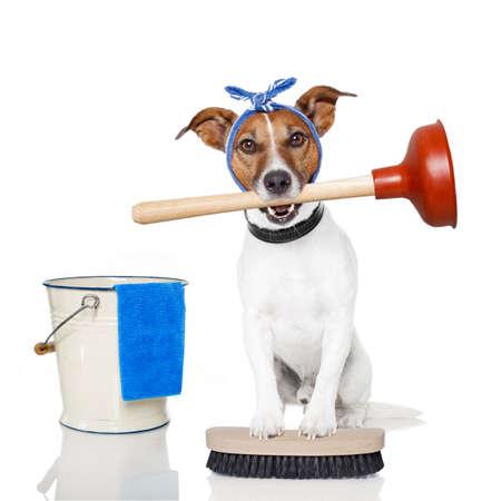 fontanero: la limpieza del perro Foto de archivo