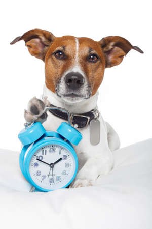 up wake: dog with alarm clock