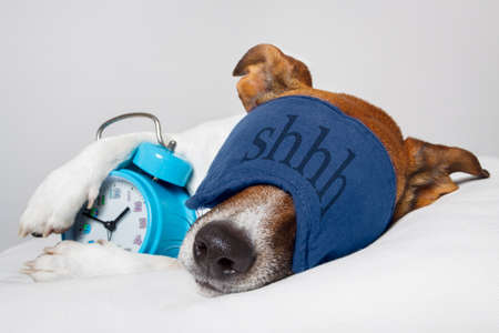 pillow sleep: dog with alarm clock and sleeping