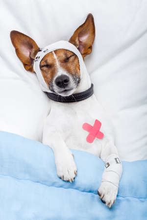 veterinarian: sick dog with bandages
