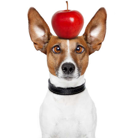 dumb: dog with an apple on top