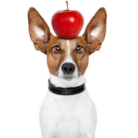 big ear: dog with an apple on top